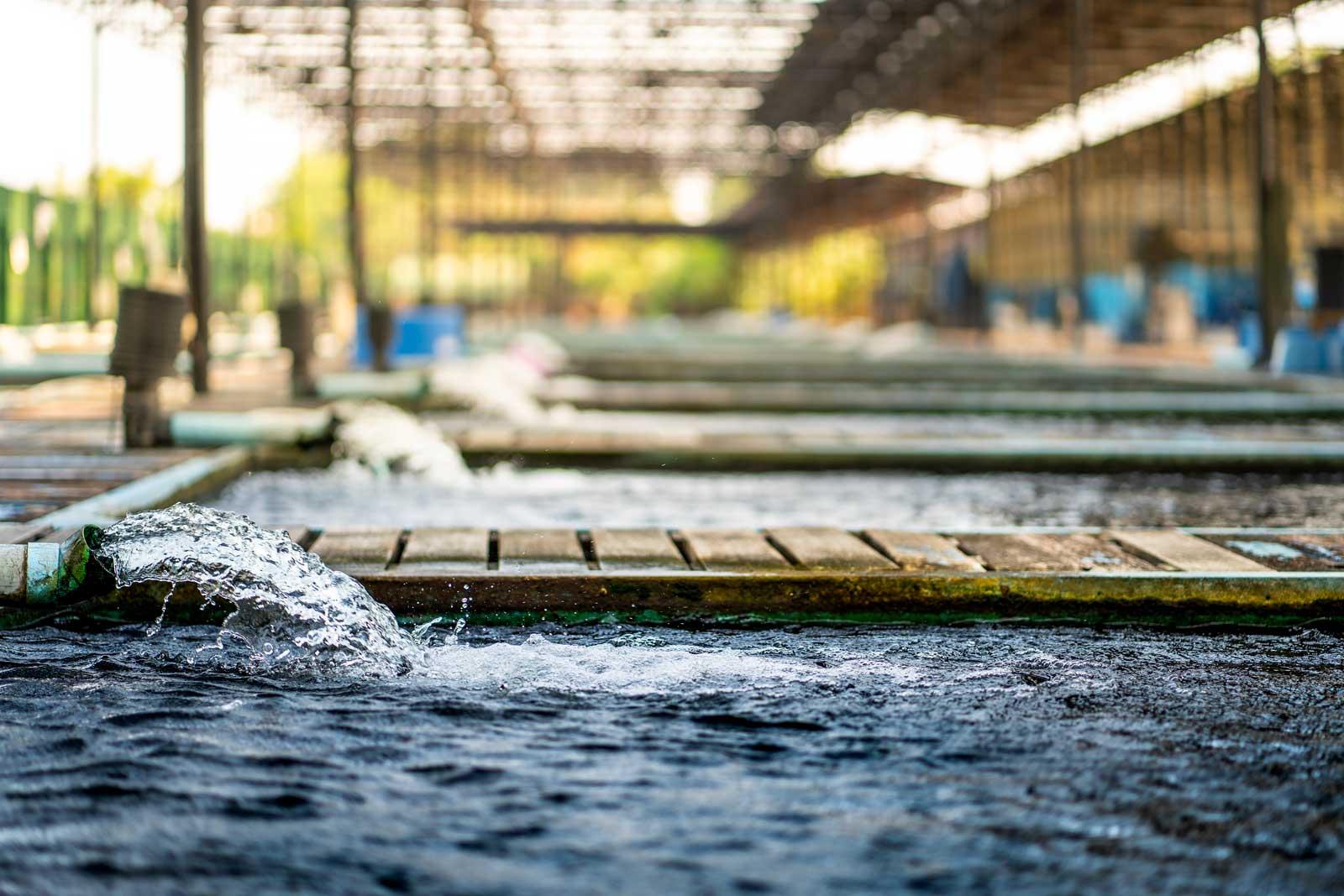 slide_eurobio-bac-graisse-services-industrie-agro-cuisine-centrale-bio-technologie-environnement-assainissement-station-epuration-odeurs-eaux-usees-france-europe04